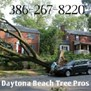 Daytona Beach Tree Pros in Daytona Beach, FL
