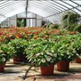 Going Green Plant Nursery & Farms in Screven, GA