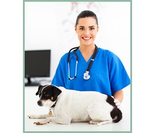 Broadview Animal Hospital